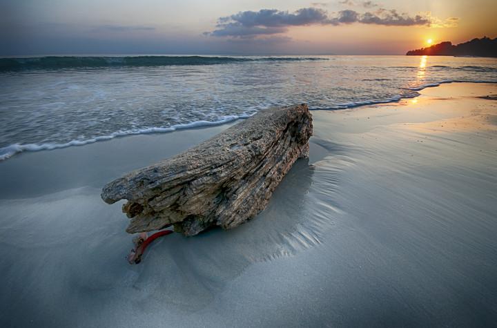 Andaman Log on Beach_VAB8445