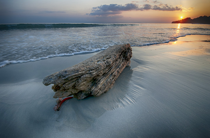 Andaman Log on Beach_VAB8445