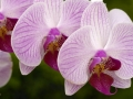 141-Decor-Orchids-DSC_7210 copy